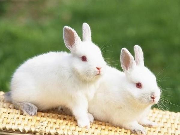 寻找合作伙伴的属兔人注意了,这几个生肖的人可一定要慎重!!
