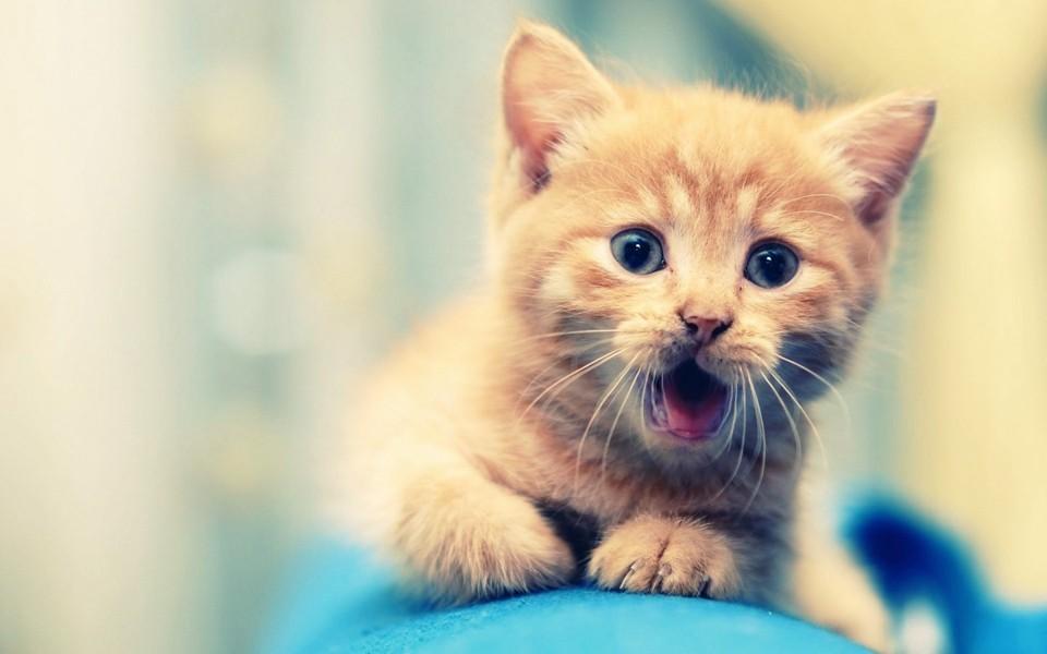 做梦梦到自己养了一只猫是为什么?做梦梦到养了一只猫好不好?