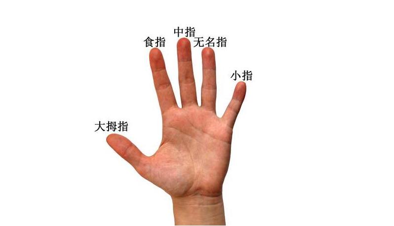 从手指缝隙大小看人性格特征